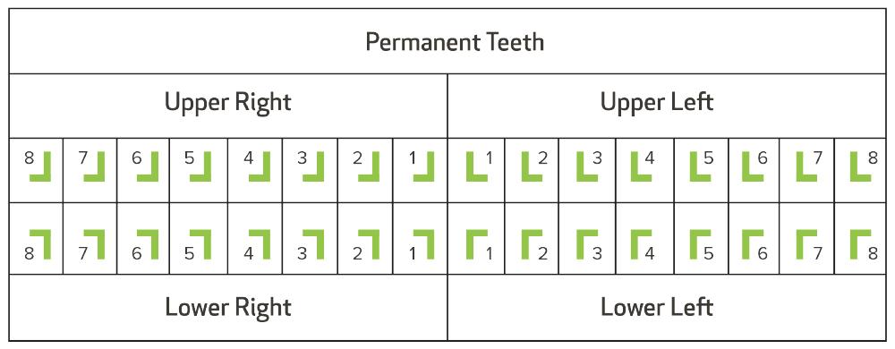 Palmer Notation