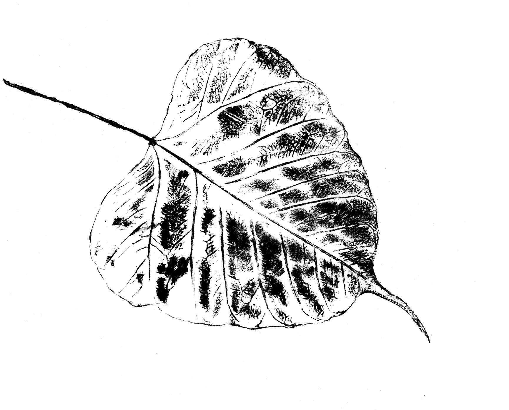 leaf-04